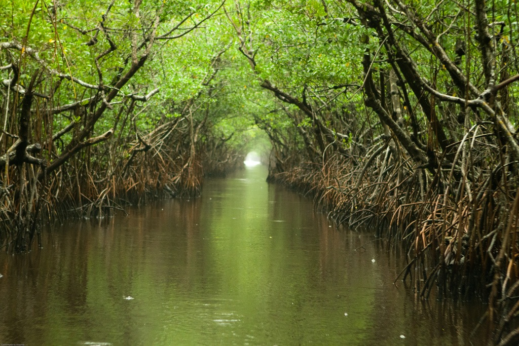 "everglades ""tunnel"""